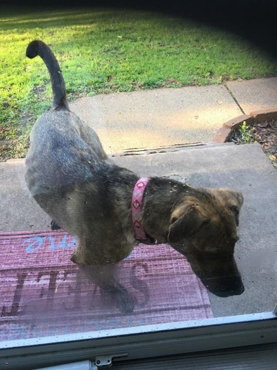 Is This Your Dog Woodbury Unknown Breed Female Date Found 05 16 2019 Breed Of Dog Unknown Breed Gender Femal Losing A Dog Dog Ages Dogs