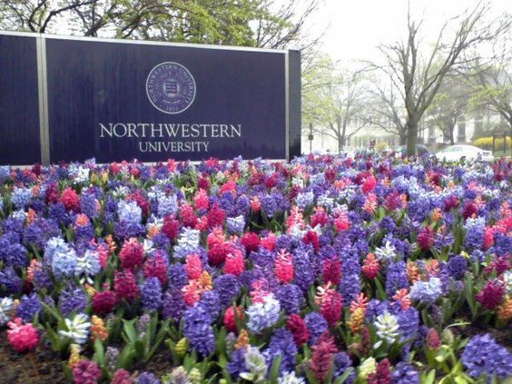 Do I even have a SLIGHT chance at getting into Northwestern University?