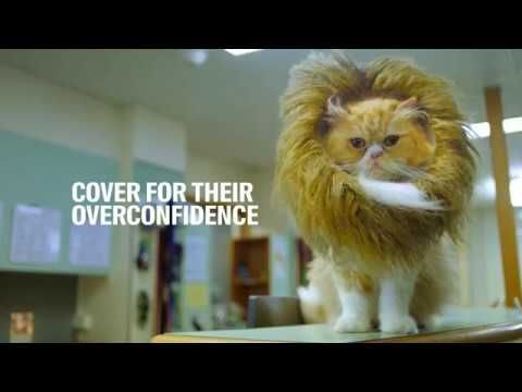 Racv Pet Insurance With Images Pets Pet Insurance Pitbull Puppy Care