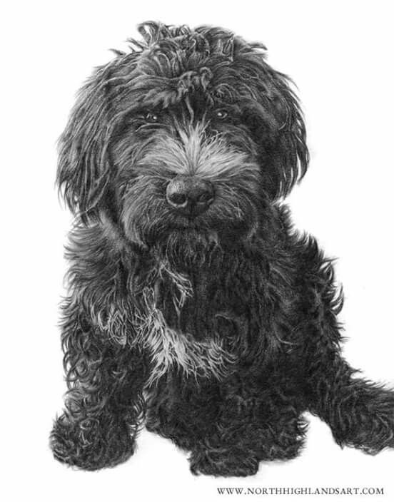 Image result for poodle draw black