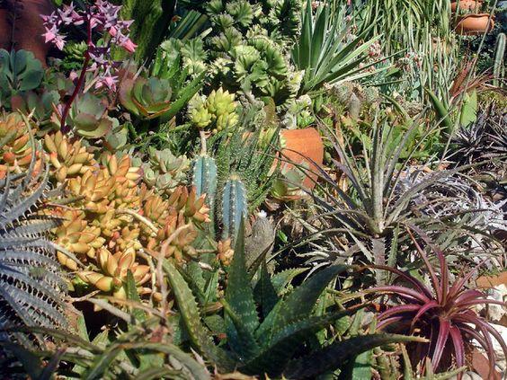 Vida Suculenta: Dicas de Cultivo e Perguntas frequentes