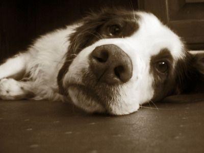 Buddy on a lazy Sunday