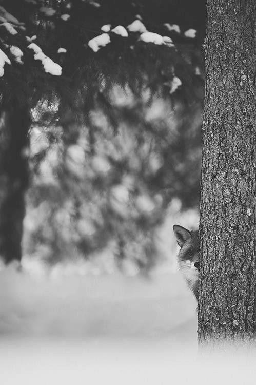 #fox #pb #woods
