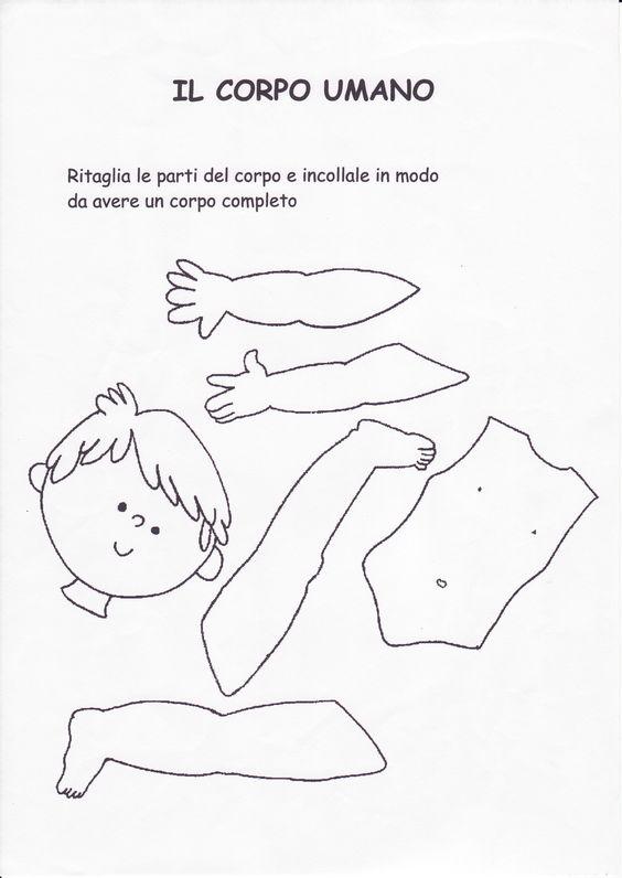 schede didattiche corpo umano scuola infanzia - Cerca con Google: