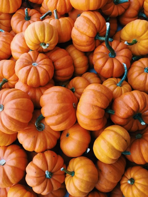 No such thing as too many pumpkin pins.: