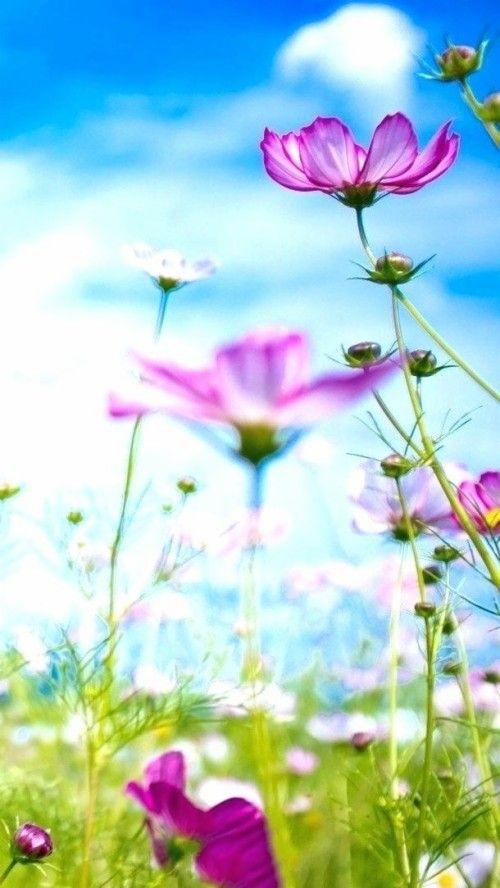100 Most Beautiful Flower Wallpapers Hd Desktop Free Download Flower Wallpaper Most Beautiful Flowers Beautiful Flowers Wallpapers