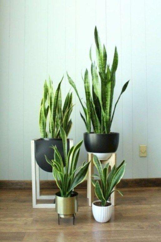 39 Modern Flower Pots Ideas For Indoor Use Indoor Plants Plant