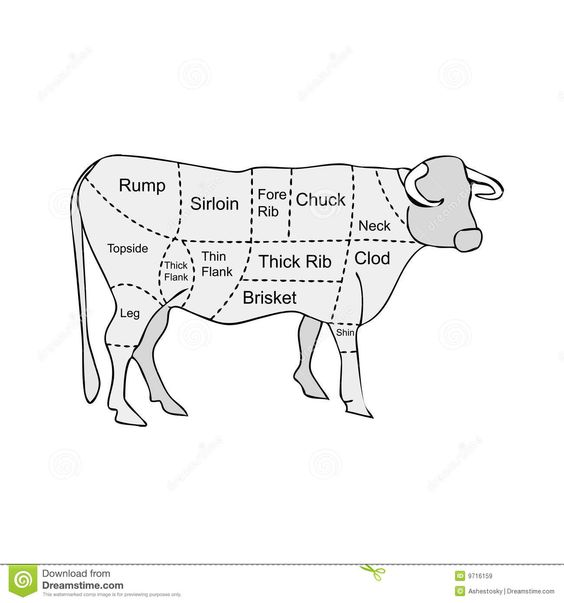 parts of a cow  a cow and cow on pinterest