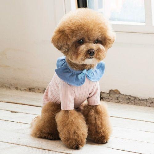 Becoming Studio Berry Dog T Shirt Pink Dognpet Pet Apparel