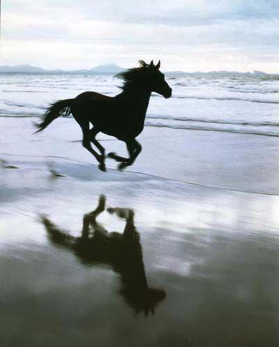 Googles billedresultat for http://upload.wikimedia.org/wikipedia/en/8/8d/Cancara_-_The_Lloyds_TSB_Black_Horse.jpg