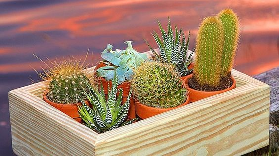 palavo treasure box with plants