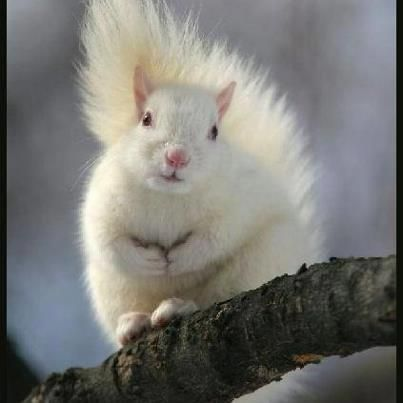 Stunning white squirrel. When we were kids we used to have a grey squirrel that came everyday for a doughnut