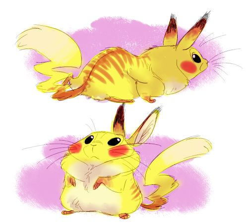 chubby chus by Andrew Wamboldt