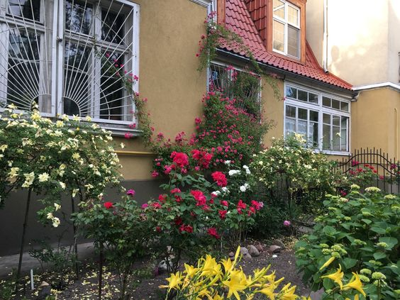 Цветущий дворик перед чьим-то домом