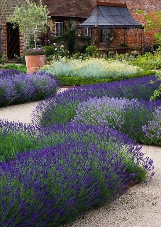 English Garden, Lavender