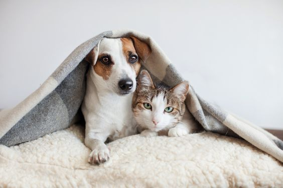 6 Tips To Manage A Large Pet Family In A Small Home Dogtime Dogs Hugging Pets Pet Dogs