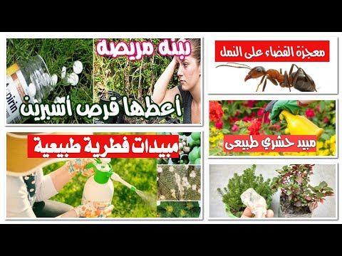 القضاء على النمل والحشرات والفطريات واعفان الجذور والبق الدقيقى والمن بمبيدات منزلية قناة تكنومكس م Youtube In 2020 Holiday Decor Christmas Tree Holiday