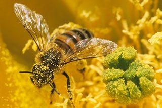 Help save America's bees to save our food crops.