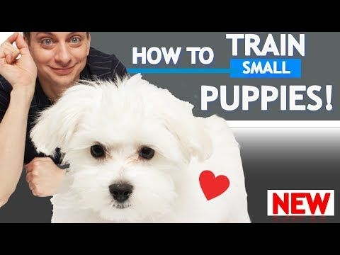 This Is The Official Youtube Channel Of Me Dog Trainer Zak George