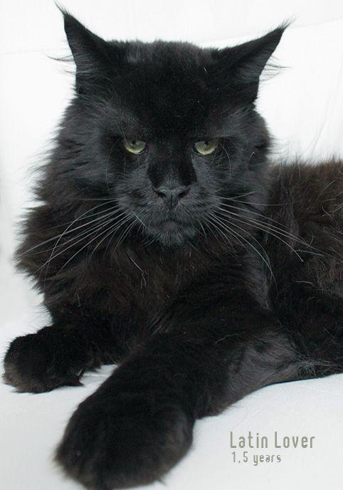 Pin On Le Chat Noir