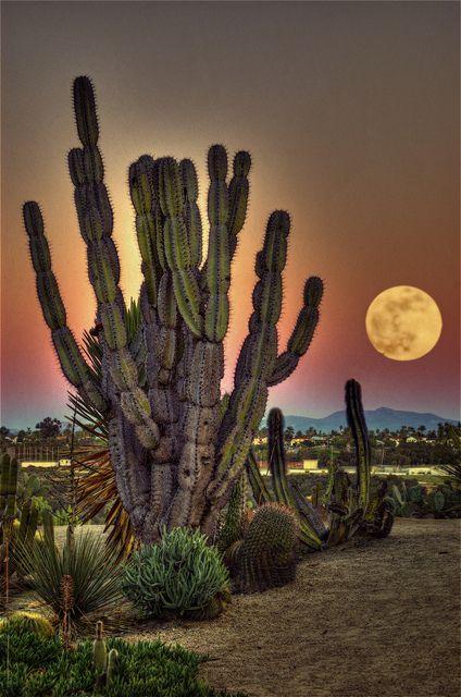 Cactus Garden, Balboa Park | surreal moonscape, San Diego, California by Artypixall: