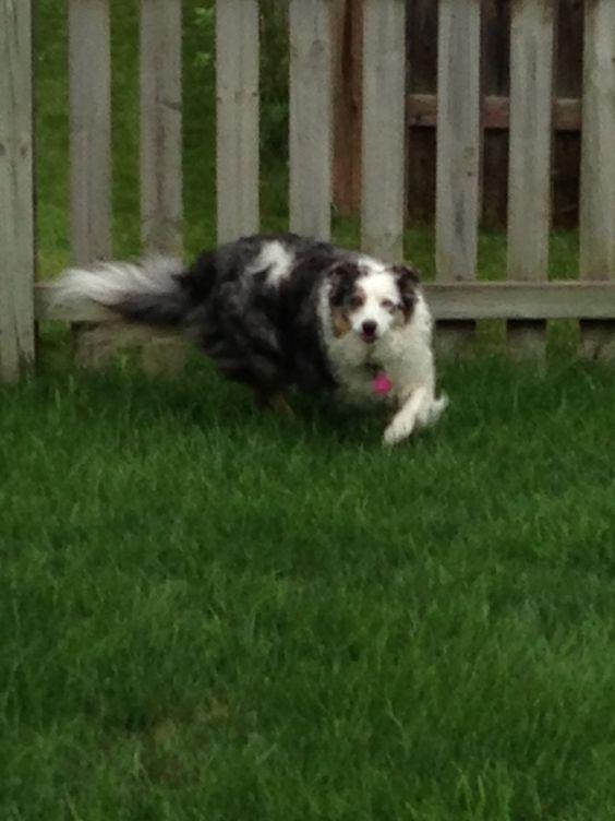 Baelei running around the backyard.