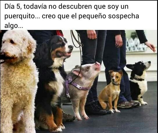 Pin By Ktmport On Free Quotes About Amor Pasion O Deseo Funny Animal Memes Funny Animals Animals