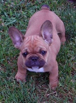My Penny as a pup :-)