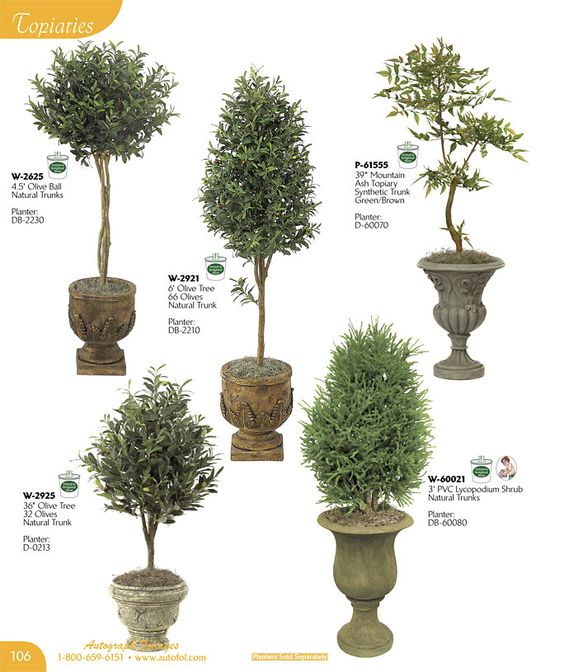 Various topiaries bonsai shrub plant types shapes for Garden trees types