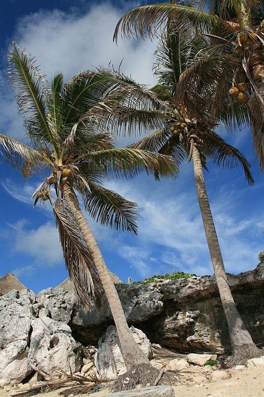 jolis palmiers
