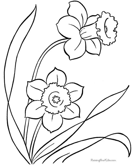 Flower coloring pages: A single flower | Free printable, Flowers ...