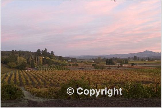 Wine Country, photography, Irene Deem, Sonoma Harvest Fair Pro Color Div. Winner, available online at http://www.shutterfly.com/pro/DeemPhotography/Landscapes