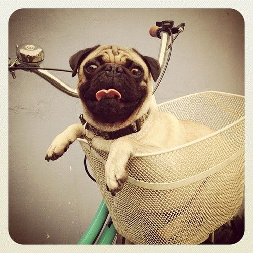 Let's go for a ride!