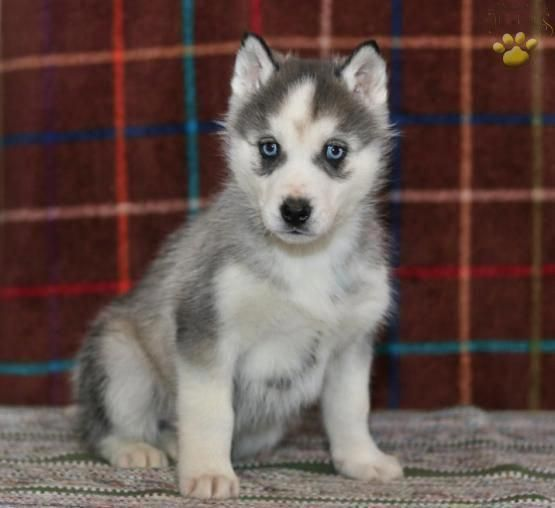 Learn More Details On Siberian Look At Our Website Siberian