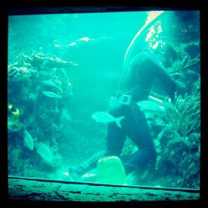 limpia acuario