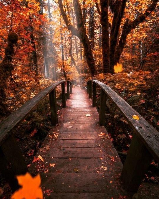 Autumn Cozy Nature Photography Beautiful Photography Nature Nature