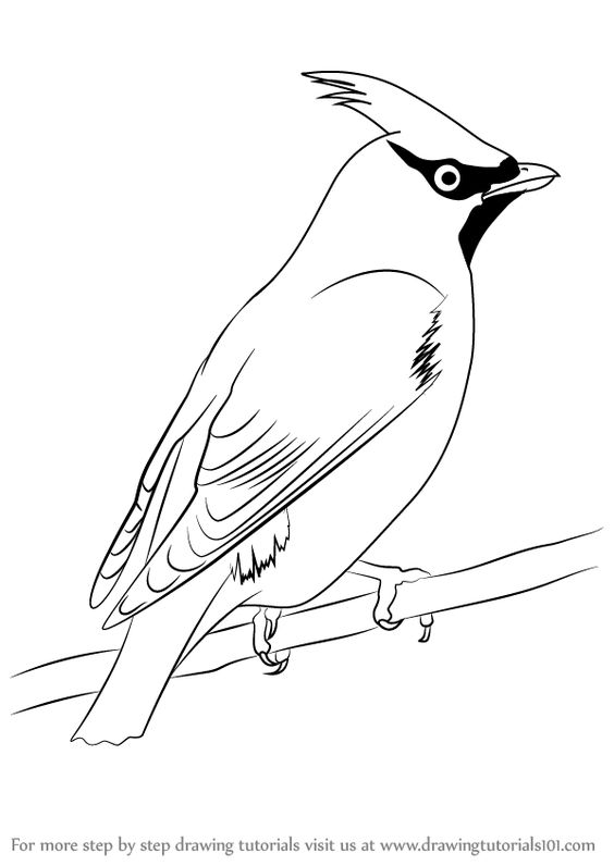Line Drawing Of Animals And Birds : How to draw and step by drawing on pinterest