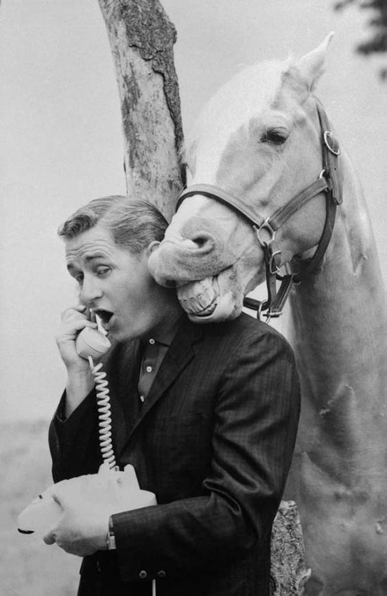 Alan Young with Mister Ed Talking on Telephone.