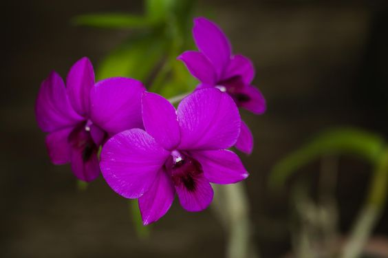 Orchid by Akhyar Maha on 500px