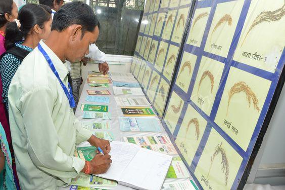 इंदिरा गाँधी कृषि विश्वविद्यालय पहुंचे रायपुर जिले के पंचायत प्रतिनिधियों ने  आधुनिक कृषि की उपयोगिता के बारे में जाना-समझा. यहाँ धान की हजारों किस्मों का अनूठा संग्रह देख प्रतिनिधि विस्मित रह गए. कृषि उपकरणों के उपयोग, खाद-बीज की जानकारी भी उन्हें दी गई.
