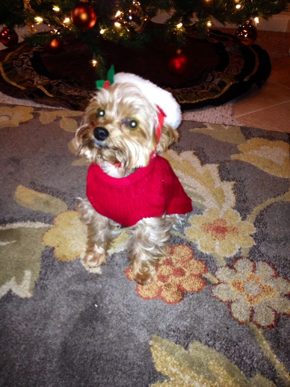 Richie in his Santa outfit.