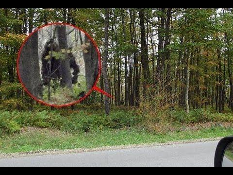 Nueva evidencia de Sasquatch o Pie Grande [3 Octubre 2013]