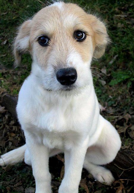 Volunteer @ animal shelter once a month???