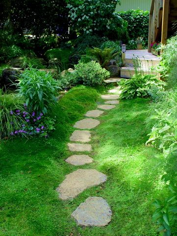 Amazing Stepable Plants For Yard And Garden Plants