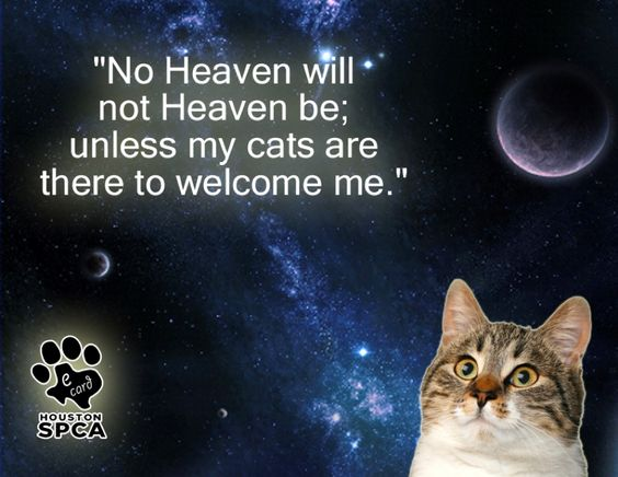 I hope my cat meets me in heaven |Pinned from PinTo for iPad|