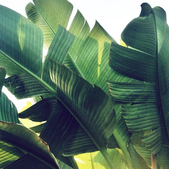fresh green palms remind us of warmer days #thinkwarm #tuckernucking