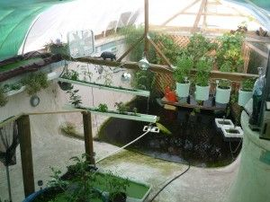Wow these people turned an old backyard pool into a for Garden pool aquaponics