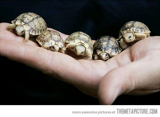 little turtles.