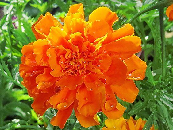 Flowers to be planted in my garden by Andre Beukes, via Flickr