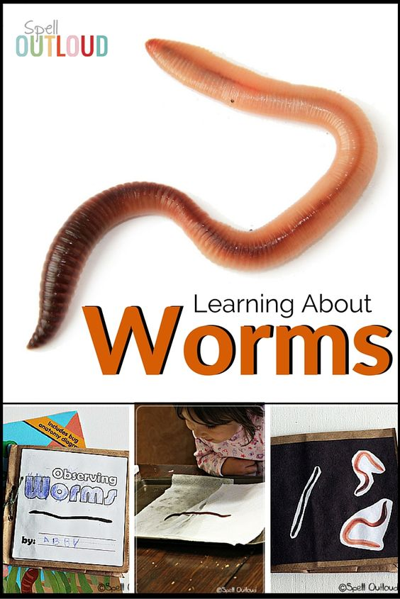 Toddlers and preschoolers are fascinated by worms! Here are several hands-on activities that help them learn more about worms.